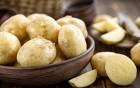 Kartoffel-Helden - alles über die tolle Knolle