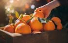 Mit Zitrusfrüchten gegen die Sommerhitze