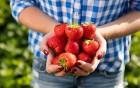 Erdbeere – reich an wichtigen Nährstoffen