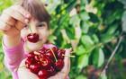 Kirschen: Süß und gesund